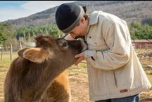 THE KIND FIGHT / Helping Animals, the Environment and the World through education, love and compassion.