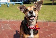 Lula-Mae loves to play!