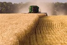 Harvest / The bountiful harvest and all that it takes to get it there.