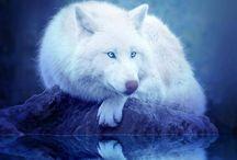 Natural Wolves