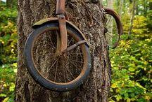 W drzewie i z drzewa