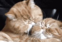 Katter og hunder