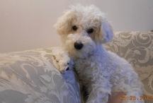 Niguel my dog