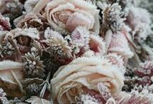 Crystal ice and snow ❀