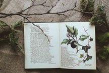 Herbal Corner ❀