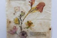 Pressed flowers art ❀