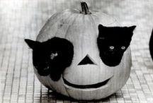 Zalando ♥ Halloween