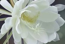 Virágok - internetről / Mások fotói