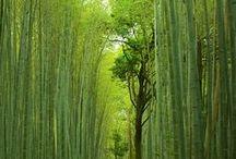Erdők, fák / Természet