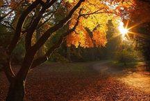 Sweet Breath of Autumn / My favorite season.
