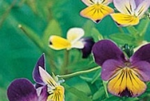 Flowers & Plants / by Sharon Wagoner
