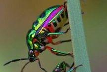 Insekten / Allerlei insekten