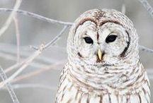Vogels / Allerlei soorten vogels