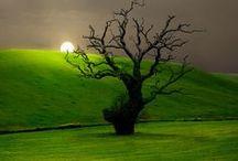 Nature Wonders