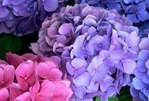 doğayı ve çiçekleri seviyorum