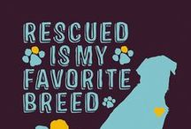 Lulu's - Rescue is Love / Lulu's Rescue mission is to end the daily killing of thousands of adoptable dogs in the U.S. by combining rescue, spay/neuter outreach and public education.  http://lulusrescue.com/adopt