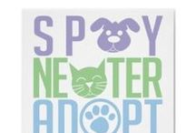 Lulu's Rescue - Spay & Neuter / Our mission at Lulu's is rescue, humane education, and spay/neuter outreaches. One of the exciting movements in spay/neuter is offering low-cost, high-quality, high-volume spay/neuter surgeries. Lulu's is now working to bring this spay/neuter model to communities by acquiring construction trailers and re-purposing them into surgical pods in rural southern areas with extreme populations of companion animals.