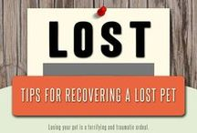 Lulu's Rescue - Lost Dog Tips / Lost Dog Tips