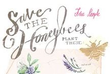 How to Save the Bees / Bees are in a serious decline all around the world so we're pinning some simple ways that you can help minimise the plight of the bees!