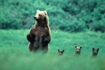 Animals / Furbabies!