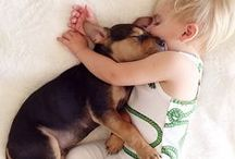 Cuddling with Dogs / Love and cuddles, sweet dogs