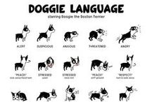 Infographs - Dogs