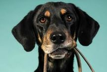 Dog Care Hints / Helpful hints on how to care for our dogs.