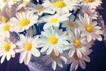 sanat kili / sanat kili çiçek tasarımları