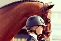 Horse Ispiration