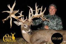 2015 Oak Creek Monster Bucks Harvest on the Main Ranch / The hunter are harvesting some monster bucks on the main ranch in the 2015 season.