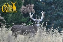 Monster Bucks of the Main Ranch 2015 / These are the bucks we see as we are out and about in the main ranch at Oak Creek.