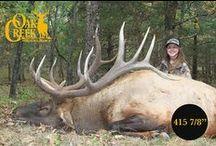 2015 Elk of Oak Creek / This board will feature the elk harvested during the 2015 hunting season at Oak Creek.