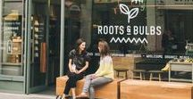 Roots & Bulbs