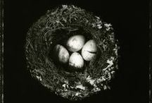 Feathers, Nests & Birds