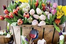 gardening / by Elaine Hills