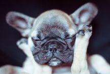 cute! / by Hannah deVos