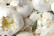 Flowers: White & Cream