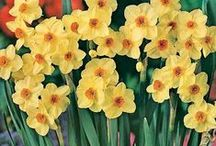 Flowers: Yellow & Orange