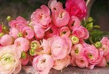 Flowers: Peach, Pink & Blush