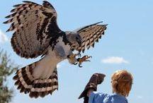 birds of prey / by Renée Fairhurst