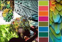 Color Palettes / by Megan Meyer