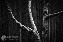 Rural ©Andi Rusyn