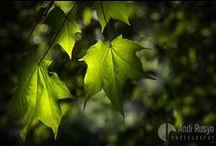 Verdant © Andi Rusyn