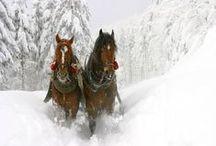 Horses & other animals - Lovak és egyéb állatok