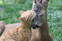 God's wonderful, beautiful creatures / by Teresa Price