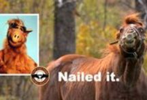 Horse Humor / Some things to make you smile. Enjoy!