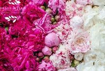 Flowers (for Florist + Floral Designers) / Flowers, Floristry and all things Floral Design! Inspiration and eye candy for Florists