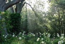 Exterior Inspiration / inspiration for our gardens and home