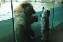 [Teddy] Bears