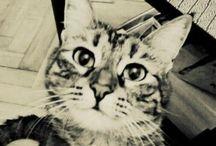 Zoe & Mia  / Kedi dostlarımız...